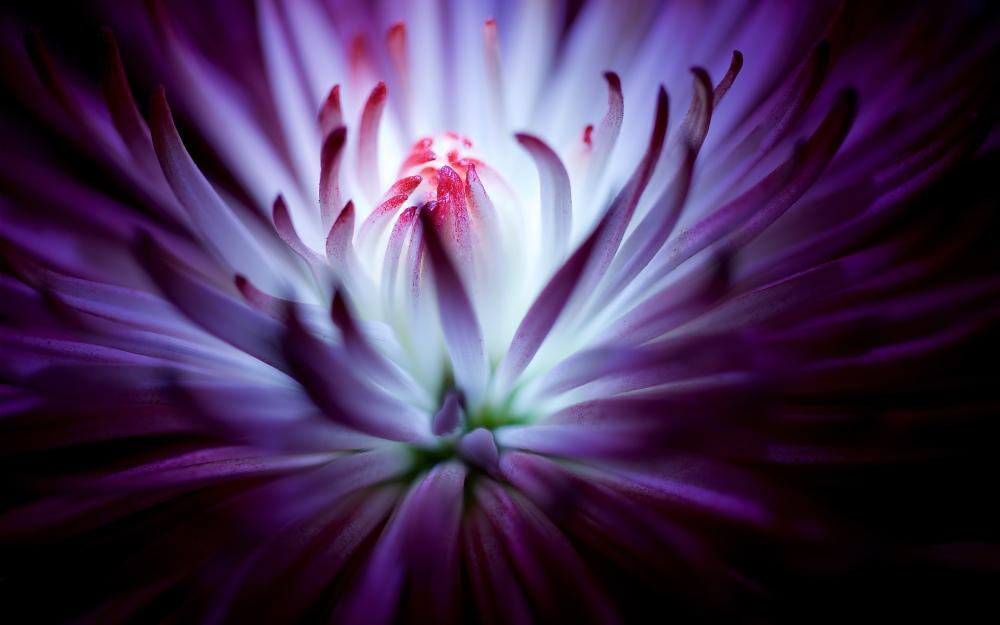 purple_flower_4k-wide